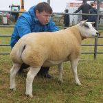 Beltex gimmer at Tiree Agricultural Society Show